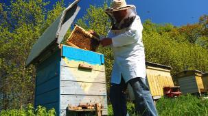 photo of beekeeping
