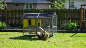 photo of backyard coop