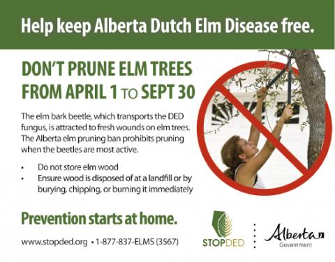 Dutch Elm disease prevention poster