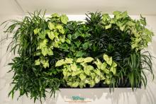 Photo of living wall in Eco Station building