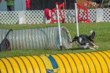 2016 - Dog Agility Canadian Open 10