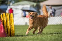 2016 - Dog Agility Canadian Open 2