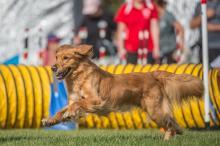 2016 - Dog Agility Canadian Open 3