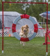 2016 - Dog Agility Canadian Open 15