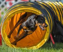 2016 - Dog Agility Canadian Open 4