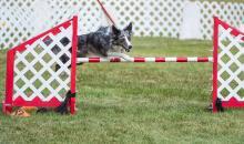 2016 - Dog Agility Canadian Open 18