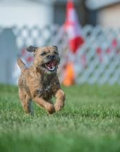 2016 - Dog Agility Canadian Open 6