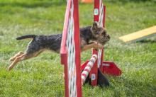 2016 - Dog Agility Canadian Open 20