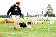 National dog agility championship at William F. Lede Park
