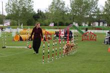 National dog agility championship at William F. Lede Park