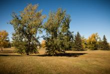 Image of Aileen Faller Park